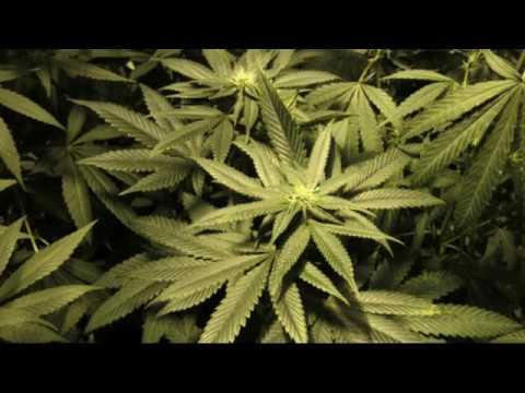 Washington state bill would ban bitcoin for marijuana sales