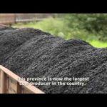MINERADORA de BITCOIN e ALTCOINS – AWS Mining na Mongólia