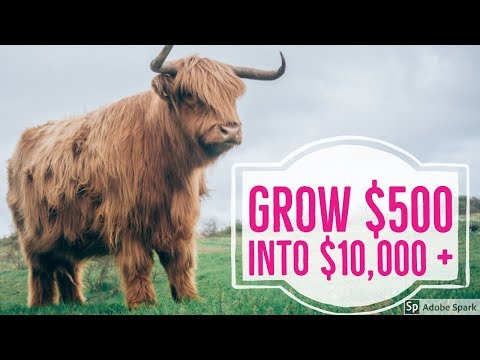 Best Way To Make Money Online | The Profit Challenge |(2019)