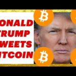 Donald Trump Tweets Bitcoin -I'm BULLISH!
