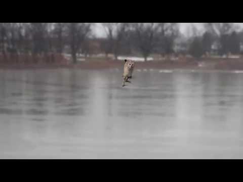 Jesus Cat Crosses the Susquehanna River !!