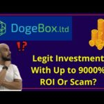 DogeBox.ltd Review: Legit Bitcoin Trading With Crazy ROI Or Scam?