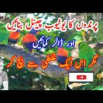 Make Bird's YouTube Channel and start to earm money| make money online|How to earn money on YouTube
