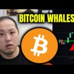 WOAH!! LOOK AT WHAT THE BITCOIN WHALES ARE DOING!!!
